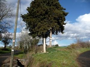 Montagnac - Chemin de la Clapière (2)