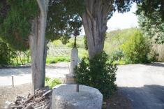 Castelnau-de-Guers - Piquetalen (3)